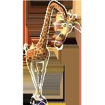 Melman_bio_02